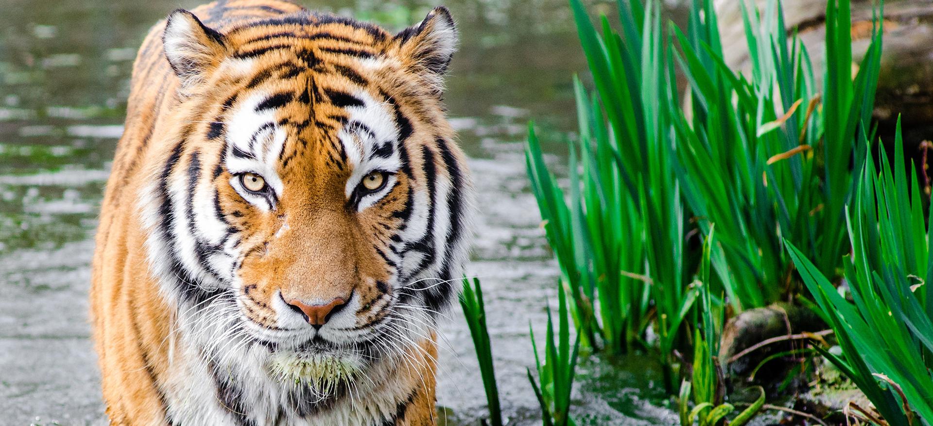 Sara Doati Traduzioni - Il Caso Tiger King
